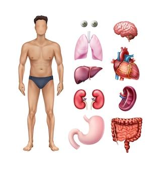 Ilustración de la plantilla del cuerpo masculino con iconos detallados de órganos internos humanos en fondo blanco