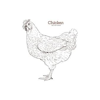 Ilustración de pollo dibujado a mano