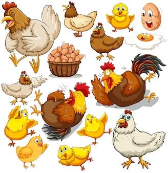 Ilustración de pollo y huevos frescos