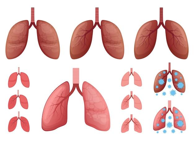 Ilustración de pulmones aislado sobre fondo blanco.