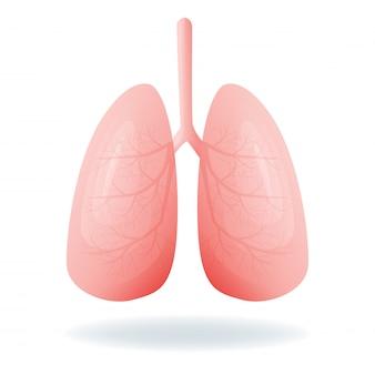 Ilustración de pulmones humanos