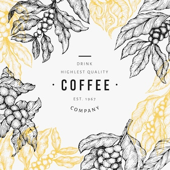 Ilustración de rama de cafeto.