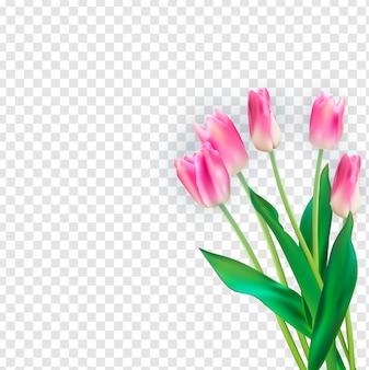 Ilustración realista coloridos tulipanes en transparente