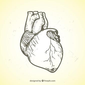 Ilustración realista de corazón dibujado a mano