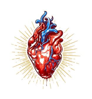 Ilustración realista del corazón