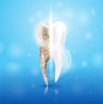 Ilustración realista diente limpia en 3d vector