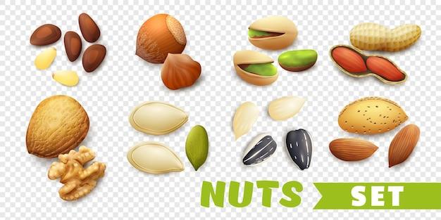 Ilustración realista de frutos secos conjunto aislado