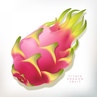 Ilustración realista de pitaya o fruta del dragón