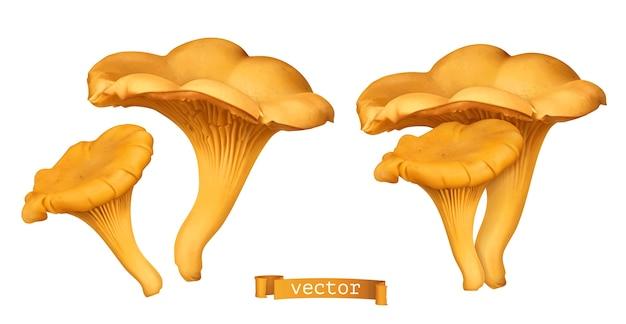 Ilustración realista de seta de rebozuelo dorado