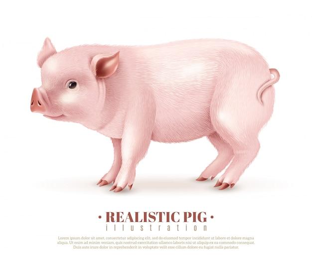 Ilustración realista del vector del cerdo