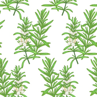 Ilustración de romero. patrón sin costuras. flores de plantas medicinales sobre un fondo blanco.