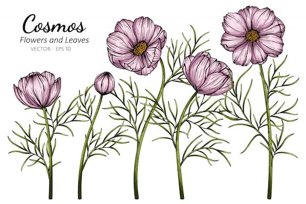 Ilustración rosada del dibujo de la flor y de la hoja del cosmos