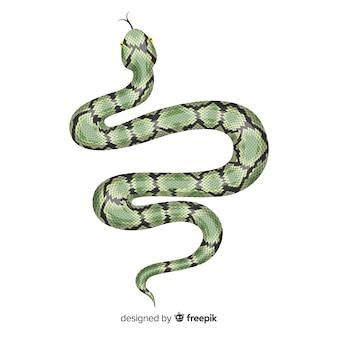 Ilustración serpiente realista dibujada a mano