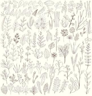 Ilustración de varios tipos de plantas