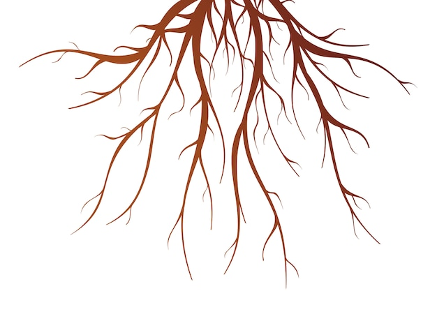 Ilustración de vector aislado plano de raíces de árbol marrón