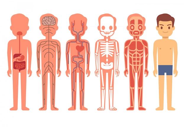 Ilustración de vector de anatomía del cuerpo humano