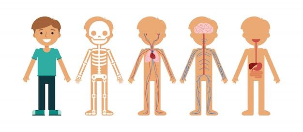 Ilustración de vector de anatomía del cuerpo de niño.