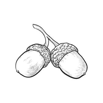 Ilustración de vector de bellotas dibujadas a mano