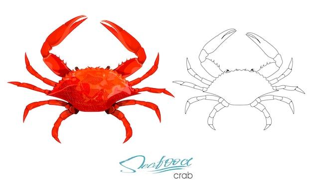 Ilustración de vector de cangrejo aislado sobre fondo blanco silueta lineal de mariscos de un cangrejo