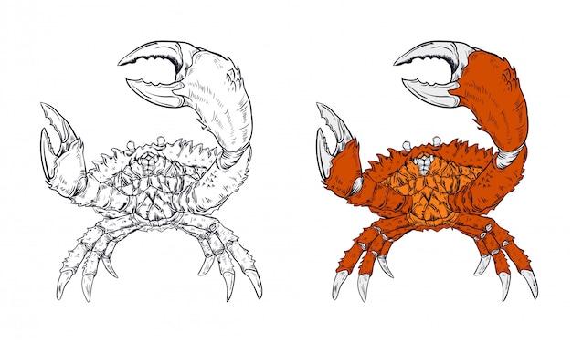 Ilustración de vector de cangrejo