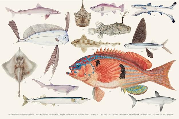 Ilustración de vector coloreado de la colección de dibujo de peces