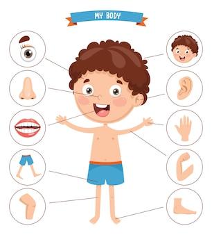 Ilustración del vector del cuerpo humano
