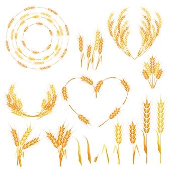Ilustración de vector de espiguillas de trigo.