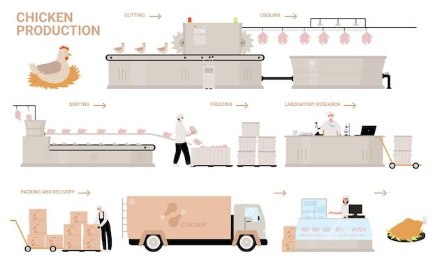 Ilustración de vector de etapas de proceso de producción de pollo.