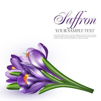 Ilustración de vector con flores de azafrán
