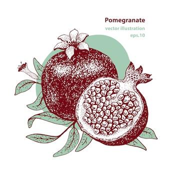 Ilustración de vector de fruta de granada.
