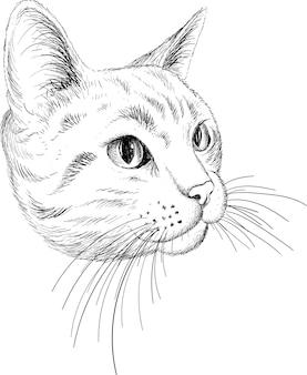 Ilustración de vector de gato