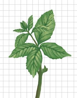 Ilustración de vector de hojas de menta plana naturaleza