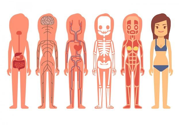 Ilustración de vector de mujer médico cuerpo anatomía
