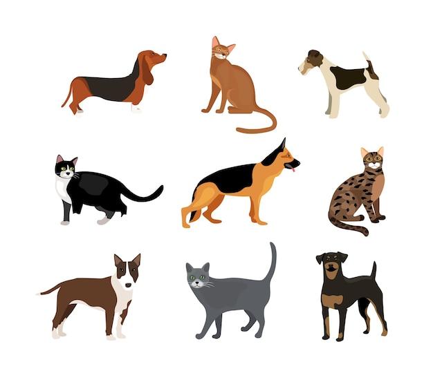 Ilustración de vector de perros y gatos que muestra diferentes razas, incluido un rottweiler fox terrier, sabueso, pastor alemán y pitbull y diferentes colores de piel en los gatos