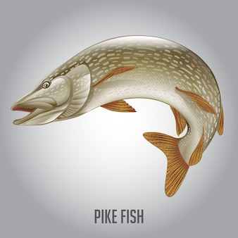 Ilustración de vector de pike fish