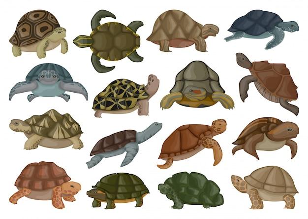 Ilustración de vector de tortuga marina sobre fondo blanco.