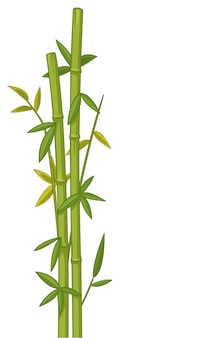 Ilustración vectorial de bambú