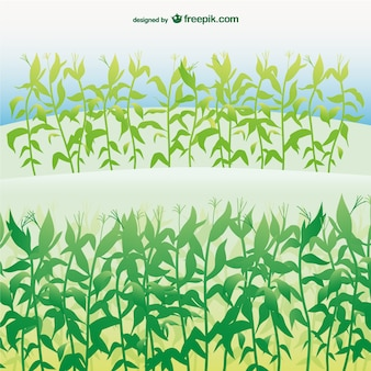 Ilustración vectorial campo de maíz