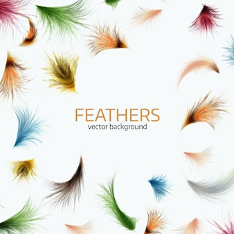 Ilustración vectorial de coloridas plumas exóticas.