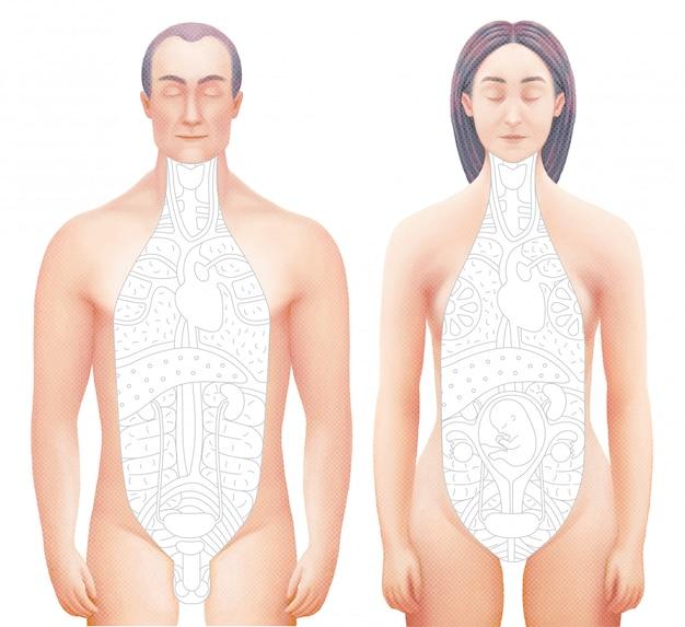 Ilustración vectorial de cuerpos seccionados de hombre y mujer.