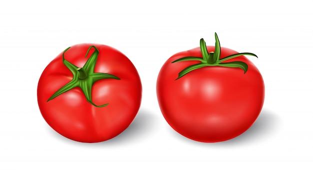 Ilustración vectorial de un estilo realista conjunto de tomates frescos rojos con tallos verdes