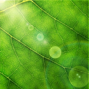 Ilustración vectorial de hoja verde