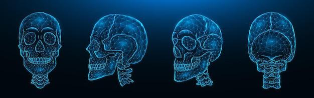 Ilustración vectorial poligonal de cráneos humanos, vistas frontal, lateral y posterior. conjunto de modelos de baja poli de cráneos con columna cervical aislada
