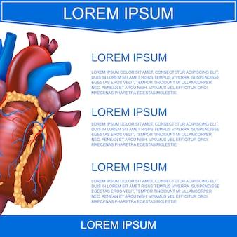 Ilustración vectorial realista sistema médico corazón