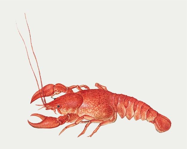 Ilustración vintage de cangrejos de río