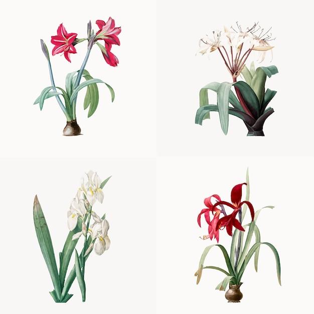 Ilustración vintage de conjunto de lily