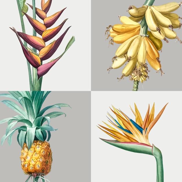 Ilustración vintage de conjunto de plantas tropicales