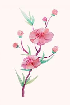 Ilustración vintage de flores de cerezo