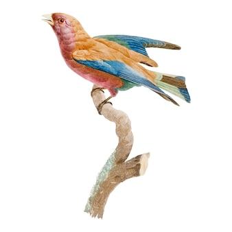 Ilustración vintage pájaro