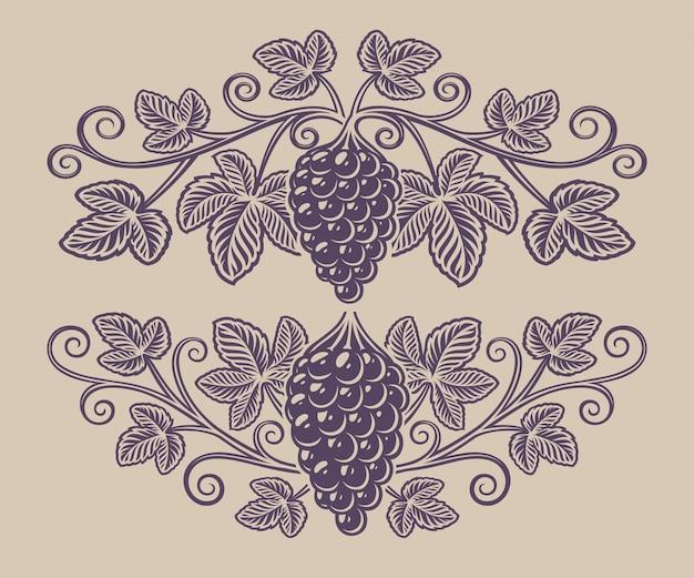 Ilustración vintage de una rama de uva en el fondo blanco.
